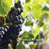 Radical Magazine vol.65 牡牛座満月号